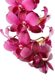 Free Beautiful Purple Orchid Stock Photos - 17176053