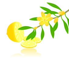 Free Citron Paradise Royalty Free Stock Images - 17178909