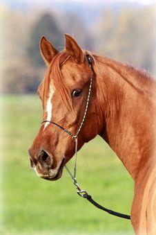 Free Arabian Beauty Stock Image - 17179331