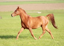 Arabian In Motion Stock Images