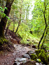 Free Wooded Path Stock Image - 17188351
