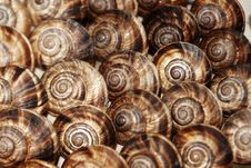 Free Edible Snails Royalty Free Stock Image - 17181036
