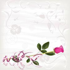 Free Pink Rose Stock Images - 17181574