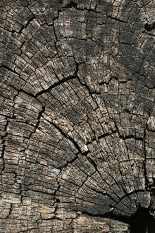 Free Old Weathered Tree Cut Stock Photography - 17181712
