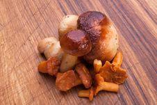 Free Mushrooms Royalty Free Stock Photos - 17181798