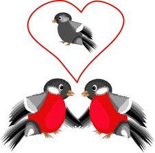 Free Bullfinches Stock Photo - 17182530