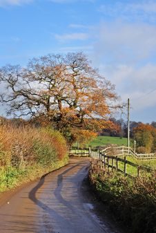 Free An English Country Lane In Early Winter Royalty Free Stock Photography - 17183127