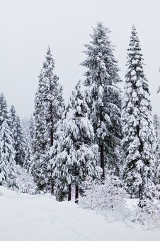 Free Heavy Snow Stock Photography - 17183452