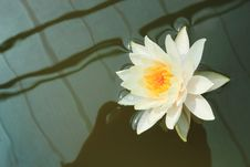 Free White Lotus On Dark Background Royalty Free Stock Photos - 17188058