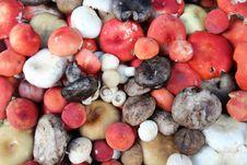 Free Colorful Mushrooms Stock Image - 17188751