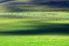 Free Grassland Royalty Free Stock Image - 17189536