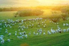 Free Pasture Land Royalty Free Stock Photos - 17189618