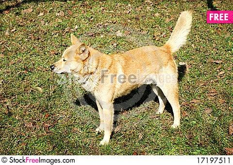 Free Dog Stock Image - 17197511