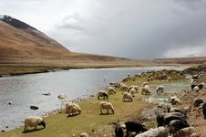 Free Landscape In Tibet Royalty Free Stock Photos - 17190368