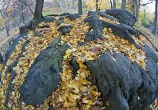 Autumn Leaves On Rocks Royalty Free Stock Photo