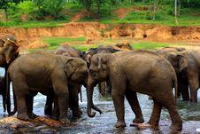 Free Elephant Washing Procedure Stock Photo - 17195080