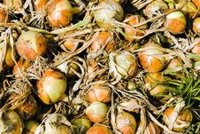 Assembled Onions Royalty Free Stock Images