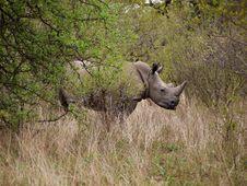 Free Rhino Hiding In The Bush Stock Photos - 17195693