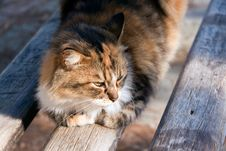 Free Cat Portrait ,a Close Up View Stock Photography - 17196002