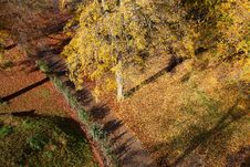 Free Autumn Leaves Royalty Free Stock Photography - 17196837