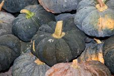 Free Pumpkins . Stock Image - 17197441