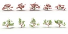 Free Ten Trees With Red And Green Leaves Stock Image - 17199761