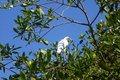 Free Bird Royalty Free Stock Image - 1723866