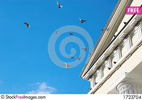 Flying pigeons Stock Photo