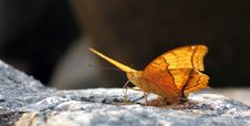 Free Butterfly Stock Photos - 1721573