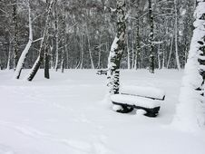 Free Park In Winter Stock Image - 1722971