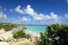 Free Iguana S Vacation Stock Photography - 1723732