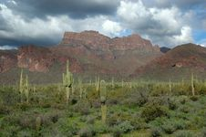 Saguaro Cactus And Mountains