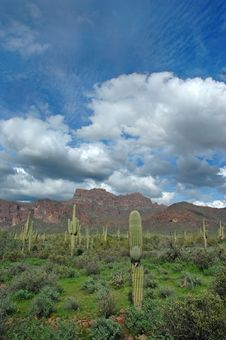 Free Saguaro Cactus And Mountains 2 Royalty Free Stock Photos - 1723778