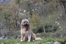 Dog Seated Royalty Free Stock Image