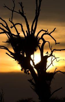 Free Sunset Nest Royalty Free Stock Image - 1727326