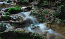 Free Stream In The Woods Stock Photos - 1729293