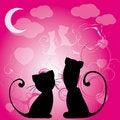 Free Cats Love Stock Photos - 17204373