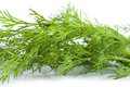 Free Green Dill(9).jpg Stock Images - 17204394