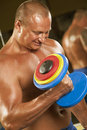 Free Body Builder Lifting Weights Stock Image - 17207451