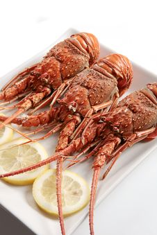 Free Boiled Lobsters Royalty Free Stock Photo - 17200175