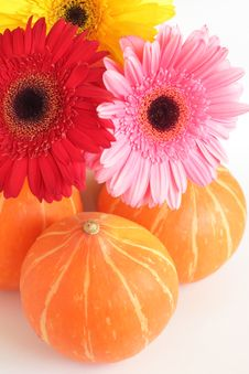 Three Pumpkins And Three Colorful Daisies Royalty Free Stock Images