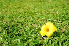 Free Colorful Flower Stock Photos - 17200993
