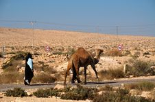 Free Camel  On Parallel Road Royalty Free Stock Photo - 17203275