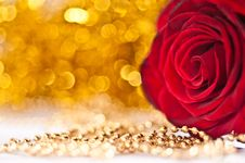 Free Red Rose. Closeup. Stock Photos - 17203383