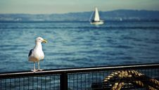 Free Seagull On Fence Royalty Free Stock Image - 17206246