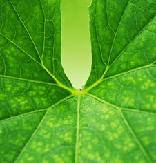 Free Green Leaf Background Stock Photo - 17208720