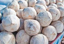 Free The Coconut Stock Photos - 17210593