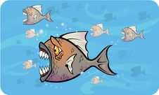 Free Piranhas Attack Royalty Free Stock Images - 17211009
