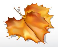 Free Detailed  Autumn Maple Leaves Royalty Free Stock Photography - 17211397