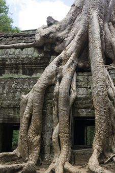 Free Tree Root Hangs Over Temple Wall Stock Photos - 17213443